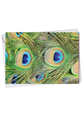C2003AMD - Fancy Feathers: Greeting Card