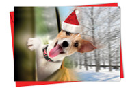 6481BXS - Holiday Doggie In The Window: Greeting Card