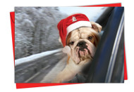 Holiday Doggie In The Window, Printed Christmas Note Card - C6481FXS
