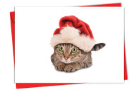 6687AXS - Santa Cats: Greeting Card