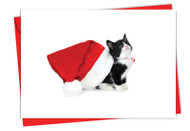 6687FXS - Santa Cats: Note Card
