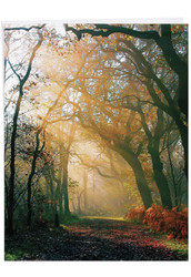 J1735AGW - Shining Through: Big Greeting Card