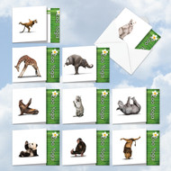 ACQ6547OC - Zoo Yoga: Square-Top Mixed Set of 10 Cards