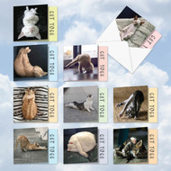 Cat Yoga, Assorted Set Of Mini Square-Top Blank Greeting Cards - AMQ4952OCB