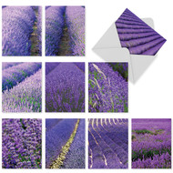 M3017 - Lavender Fields Forever: Mixed Set of 10 Cards