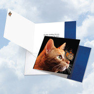 On The Nose - Tabby Cat, Printed Square-Top Birthday Greeting Card - CQ4947BBDG
