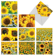 Sunflowers are defined by bursts of golden yellow.
