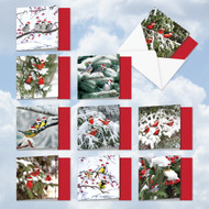 MQ5030XT - Christmas For The Birds: Square-Top Assorted Set of 10 Cards