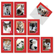 M5658VD - Heartfelt Cats: Assorted Set of 10 Cards
