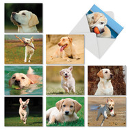 AM6325OC - Lovable Labs: Mini Assorted Set of 10 Cards