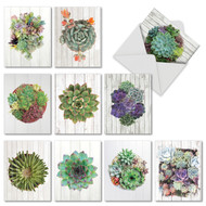 AM6438OC - Shiplap Succulents : Mini Assorted Set of 10 Cards