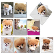 AM6755OC - Boo The World's Cutest Dog™: Mini Mixed Set of 10 Cards