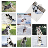 AM6827OC - Adorable Alaskan Huskies: Mini Assorted Set of 10 Cards