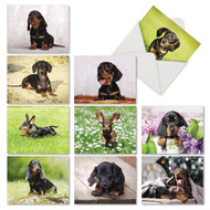 AM6829OC - Dashing Dachshunds: Mini Assorted Set of 10 Cards