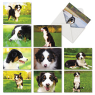 AM6830OC - Awesome Australian Shepherds: Mini Mixed Set of 10 Cards