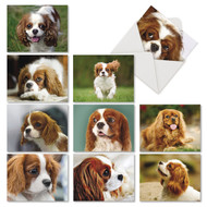 AM6831OC - Captivating Cavalier King Charles: Mini Assorted Set of 10 Cards