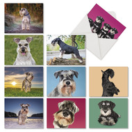 AM6832OC - Magnificent Miniature Schnauzers: Mini Mixed Set of 10 Cards