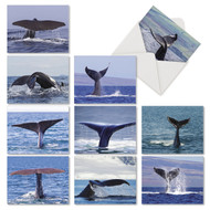 AM6839OC - Whale Tales: Mini Mixed Set of 10 Cards