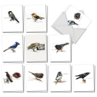 AM3199OC - Birds Watching : Mini Mixed Set of Cards