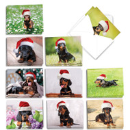AM6829XS - Dashing Dachshunds: Mini Assorted Set of Cards