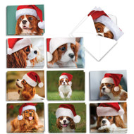 AM6831XS - Captivating Cavalier King Charles: Mini Mixed Set of Cards