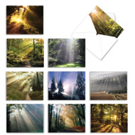 Shining Through, Assorted Set Of Mini Blank Greeting Cards - AM1735OCB