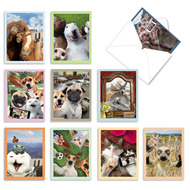 Animal Selfies, Assorted Set Of Mini Blank Greeting Cards - AM2373OCB