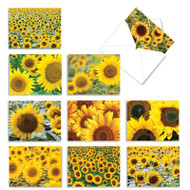 Sunny Side Up, Assorted Set Of Mini Blank Greeting Cards - AM6042OCB