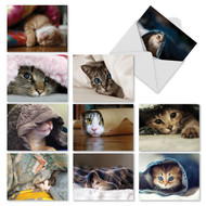 M1543 - Cat You See Me Now?: Assorted Set