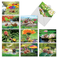 M2349OC - A Snail's Pace: Assorted Set of 10 Cards
