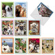 Note Cards with Wacky Animal Selfie Poses
