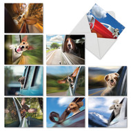 M6481TY - Doggie In The Window: Mixed Set of 10 Cards