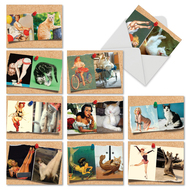 M6484TY - Cats And Chicks: Mixed Set of 10 Cards
