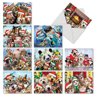 Merry Christmas To Zoo, Assorted Set Of Mini Christmas Note Cards - AM6652XSG