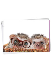 Cards From The Hedge - Glasses, Printed Anniversary Greeting Card - C6541FANG
