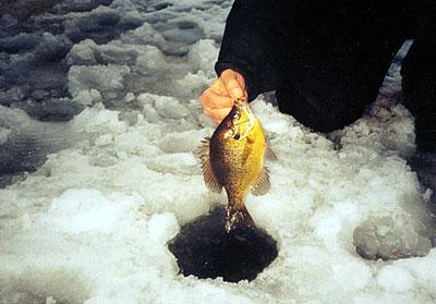 panfish1.jpg