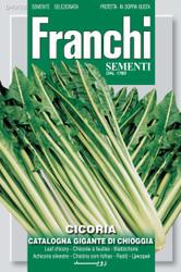 CHICORY (Cicoria) catalogna gigante di Chioggia