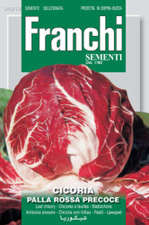 RADICCHIO (Cicoria) palla rossa