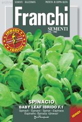 SPINACH (Spinacio) baby leaf hybrid F1