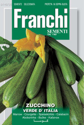 ZUCCHINI (Zucchino) verde d'Italia