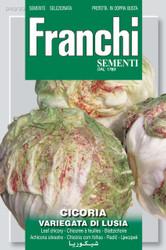 RADICCHIO (Cicoria) variegata di lusia