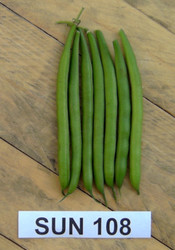FRENCH BEAN (Fagiolo nano) Sun 108