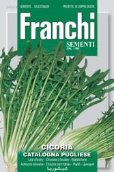 CHICORY (Cicoria) catalogna pugliese