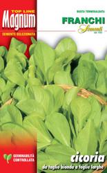 CHICORY (Cicoria) da taglio bionda foglie larghe MAGNUM 30g