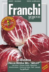 """RADICCHIO (Cicoria) palla rossa 2 sel. """"melot"""""""