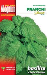 BASIL (Basilico) foglie di lattuga MAGNUM 20g