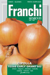 ONION (Cipolla) Texas early grano 502