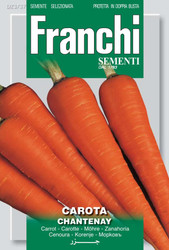 CARROT (CAROTA) Chantenay