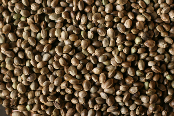 Toasted Hemp Seeds