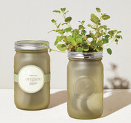 Modern Sprout Garden Jar - Greek Oregano